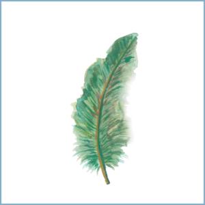 Groene veer | Ansichtkaart | 10 x 10 cm | Veldjuwelen